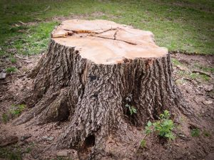 Melbourne Stump Removal
