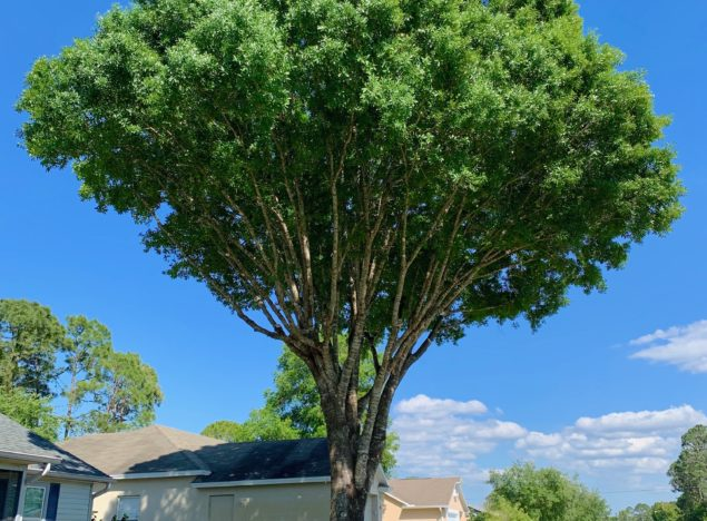 Tree Service Palm Bay FL Melbourne FL