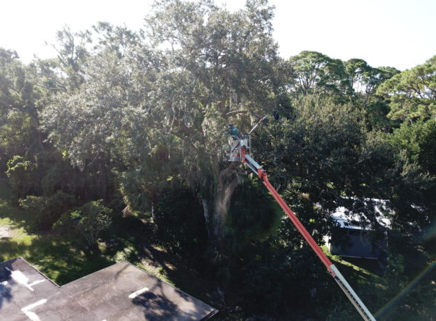 Tree Removal Palm Bay FL Melbourne FL