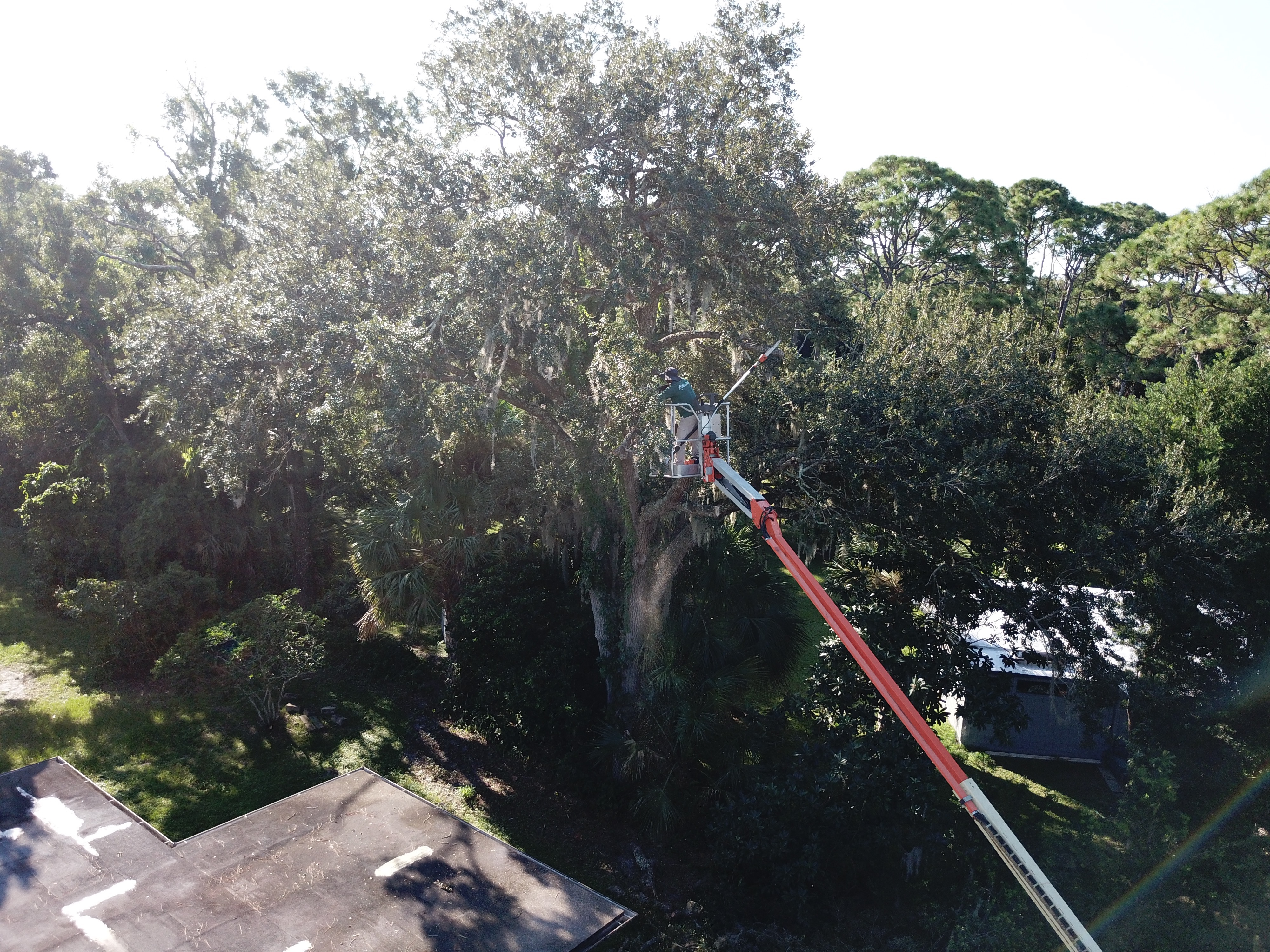 Tree Trimming Palm Bay Melbourne